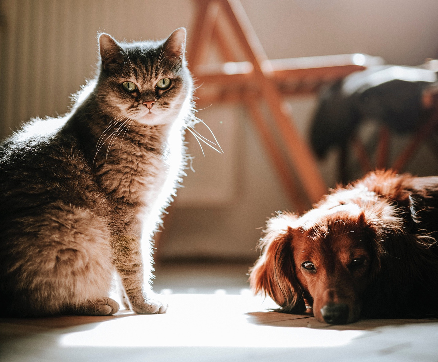 A cat and a dog  Description automatically generated with medium confidence